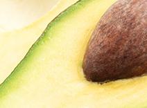 Avocado and Birch Bark Extracts